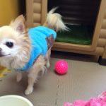 『老犬ホーム&ペットホテル 九十九里パーク』 はじめました!
