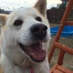 犬のアニマルセラピー