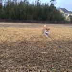 老犬介護施設の九十九里パーク (チビくん編)③