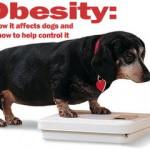 肥満はなぜよくないのか?