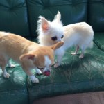 リッキーくん、モーちゃん、ムックくん、みやちゃんの面会と…老犬ホーム九十九里パークの面会ラッシュ編