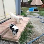 九十九里パークのシロクマさん、北海道犬の武蔵くんの面会とお散歩大好きキングくんの面会編