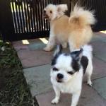 新しい仲間も加わった、老犬ホーム九十九里パークのゆかいな仲間たち編