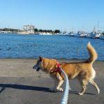 片貝漁港のお散歩コース2017、今年も色々な発見をたのしもうね~。(中型犬・大型犬)編