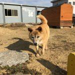 高齢犬の老犬介護施設・毎日の大量のお洗濯物も、風にあおられて踊っております。(大型犬)編