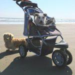 老犬ホーム関東では…九十九里パーク恒例の海さんぽにおでかけです。その1(小型犬)編