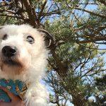 老犬介護施設・九十九里パークの…あたらしいお散歩コースでGO!(小型犬)その1編