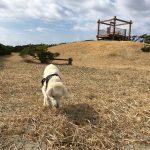 介護犬補助犬の老犬ホーム・九十九里パークのあたらしいお散歩コースでGO!(中型犬・大型犬)その1編