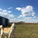 高齢犬ブログ、老犬ホーム九十九里パークのゆかいな仲間たち(中型犬・大型犬)その2編