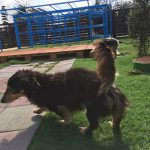 老犬介護施設・九十九里パークのゆかいな仲間達。(小型犬)その2編