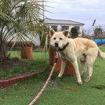 老犬ホーム・千葉から九十九里パークに、元気な男の子のジョンくんが入園しました。編