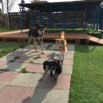 老犬・高齢犬の介護施設…九十九里パークのゆかいな仲間たち(小型犬)その1編
