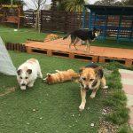 シニア犬、老犬介護・九十九里パークのワンちゃん達の一日(小型犬)その2編