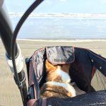 高齢犬の介護施設・九十九里パークの、あたらしいお散歩コースでGO!(中型犬・大型犬)その2編