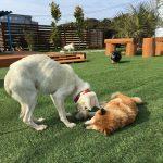シニア犬・老犬のお預かり施設、九十九里パークの仲間たち(中型犬・大型犬)その2編