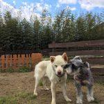 犬の老犬ホーム・九十九里パークのゆかいな仲間たち(中型犬・大型犬)その2編