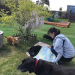 老犬ホーム・東京から九十九里パークに、ラブラドールの男の子のバルトくん(16さい)が入園しました。編