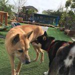 老犬ホーム・九十九里パークのゆかいな仲間たち(中型犬・大型犬)その1編