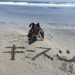 シェパードのキースくん、なつかしの片貝海岸での海さんぽ。(小型犬・中型犬・大型犬)その3編