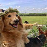 雨でシットリのドックラン…小さな先住民たちも、チラチラ顔を出しはじめました。(小型犬)その2編