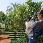 老犬介護施設の植物や木々たち…お水をたっぷり吸いあげて、元気に育ってくれるとうれしいなあ。(小型犬)その3編