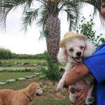 老犬ホーム九十九里パークのワンちゃん達から…残暑お見舞い申し上げます。(小型犬と柴犬のモコちゃん)その1編