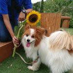 真夏の空もようは不安定…ドックランや公園でのんびりと過ごすワンちゃん達。(小型犬)その3編
