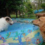 九十九里公園のミニミニプール開きと…九十九里町ふるさと祭り花火大会(小型犬)その2編