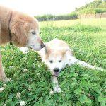 九十九里公園のミニミニプール開きはじめました、元気なザリガニくんもこんにちは!(小型犬とMIXのコロくん)その3編