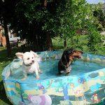 九十九里公園のミニミニプール開きと…サマーカットですっきりワンちゃん(小型犬・中型犬・大型犬)その4編