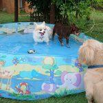 南国風の緑がいっぱいの九十九里公園では…毎年こうれいのミニミニプール開きはじめました~!(小型犬)その1編