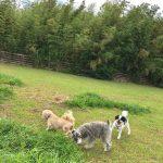 今週は台風15号の影響で…秋らしい空気を感じられる涼しい9月のはじまりです。(小型犬)その4編