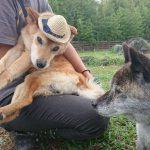 今日もすずしく過ごしやすいお天気の…秋の老犬ホーム九十九里パークです(中型犬・大型犬)その2編