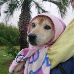 ポツポツ雨降りの九十九里公園…お散歩中のカニさんにもこんにちは~。(中型犬・大型犬)その3編
