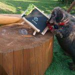 秋晴れの老犬ホーム九十九里パーク、ワンちゃん達のシッポとススキもゆれています。(小型犬)その3編