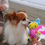 くもり空の海もおつなものですね…ワンちゃん達と海さんぽに行ってきま~す!(小型犬・中型犬)その4編