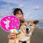 すっかり秋らしいお天気…シェパードのキースくんも愛車にのって海さんぽ。(中型犬・大型犬)その1編