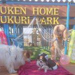 関東では晴れ間がもどり…老犬ホーム九十九里パークの公園では、ワンちゃん達のキラキラ秋冬コレクションを開催しました~!(小型犬)その1編