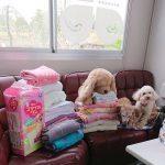 関東・老犬ホーム九十九里パークに心のこもったたくさんのご寄付をいただきました。編