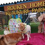 クリスマスのイルミネーションよりもキラキラの~可愛いワンちゃんたちのキラキラ秋冬コレクション(小型犬・中型犬)その6編