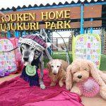 今日も小春日和のポカポカお天気ですよ~キラキラ秋冬コレクションも開・催・中~!(中型犬・大型犬)その2編