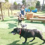 老犬ホーム九十九里パークに…千葉県からワンちゃん大好きな男の子のエスくん(14さい)が入園しました。編