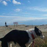 関東・老犬ホーム九十九里パークに…東京からボーダーコリーとオーストラリアンケルピーのMIXの女の子のミカちゃん(6さい)が入園しました。編