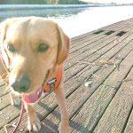 関東・老犬ホーム九十九里パークに…山梨から人懐っこい女の子のタルトちゃん(5さい)が入園しました。編