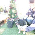 関東・老犬ホーム九十九里パークに…神奈川からペキニーズの好奇心おうせいな男の子のくうくん(6さい)が入園しました。編