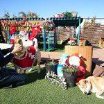 チームラブとチームゴールデンのワンちゃん達~みんなで一緒にハッピーメリークリスマ~ス!(大型犬)その3編