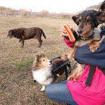 千葉の老犬ホーム九十九里パークの~ホットなワンちゃん達(HOT DOG)いらっしゃ~い!(小型犬)その3編