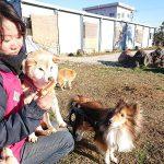 千葉の老犬ホーム九十九里パークの~ホットなワンちゃん達(HOT DOG)いらっしゃ~い!(小型犬と柴犬)その6編