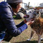 千葉の老犬ホーム九十九里パークの~ホットなワンちゃん達(HOT DOG)いらっしゃ~い!(中型犬・大型犬)その1編