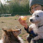 千葉の老犬ホーム九十九里パークの~ホットなワンちゃん達(HOT DOG)いらっしゃ~い!(小型犬・柴犬)その7編